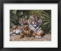 Framed Yellow Tiger With Cubs