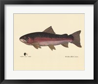 Framed Steelhead Trout