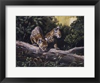 Framed Bobcat Kittens
