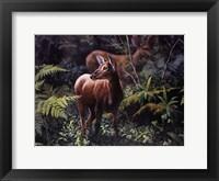 Framed Black - Tailed Deer
