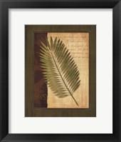 Palm Tropical III Framed Print