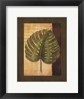 Palm Tropical IV Framed Print