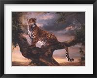 Framed Leopard In Tree