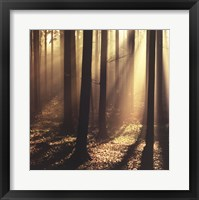 Framed Sunlight and Trees II