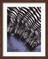 Framed Zebra's Watering Hole