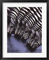 Framed Zebra's Watering Hole