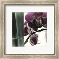 Framed Bamboo I (Flower I)