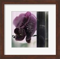 Framed Bamboo II (Flower II)