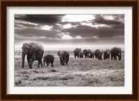 Framed Amboseli Elephants