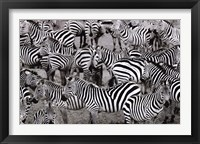 Framed Zebras Abstraction