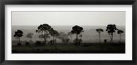 Framed Tree Line