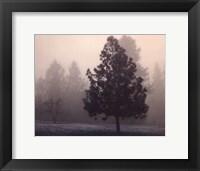 Framed Silent Night