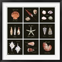 Framed Striking Shells 9-patch
