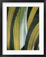 Variegated Agave I Framed Print