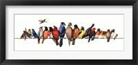 Framed Large Bird Menagerie