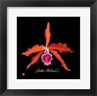 Framed Vivid Orchid II