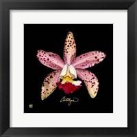 Framed Vivid Orchid III