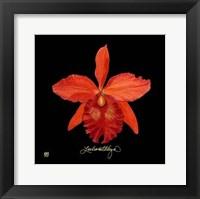 Framed Vivid Orchid IX