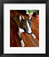 Framed Bull Terrier Down