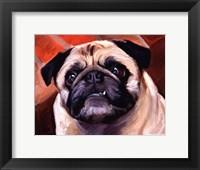 Framed Snaggle Pug