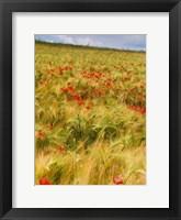 Framed Poppies in Field I