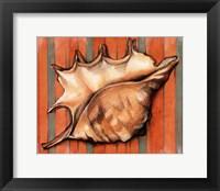Framed Shell on Stripes II