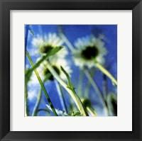 Framed Daisies II