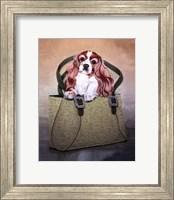 Framed Cavalier and Carry