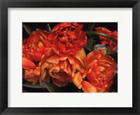 Framed Old World Tulips I