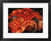 Framed Old World Tulips II