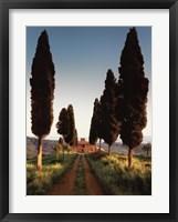 Framed Cypress Lane