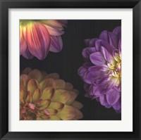 Framed Purple Dahlia I