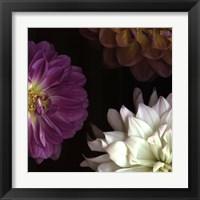 Framed Purple Dahlia II