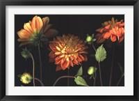 Framed Orange Dahlia Garden