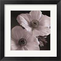 Framed Poppy Study I