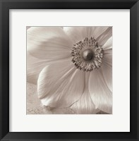 Framed Poppy Study II