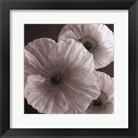 Framed Poppy Study IV
