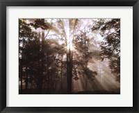 Framed New Day II
