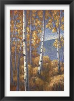 Framed Aspen Forest I