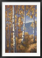 Framed Aspen Forest I