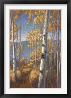 Framed Aspen Forest II