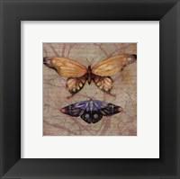 Framed Vintage Butterflies II - petite