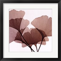 Framed Ginko Leaves I