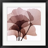 Framed Ginko Leaves II