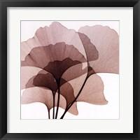 Ginko Leaves II Framed Print
