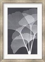 Framed Ginkos I