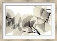 Framed Ginko Dance