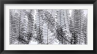 Framed Maidenhair Ferns