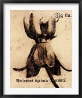 Framed Fig. 8a