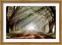 Framed Evergreen Plantation
